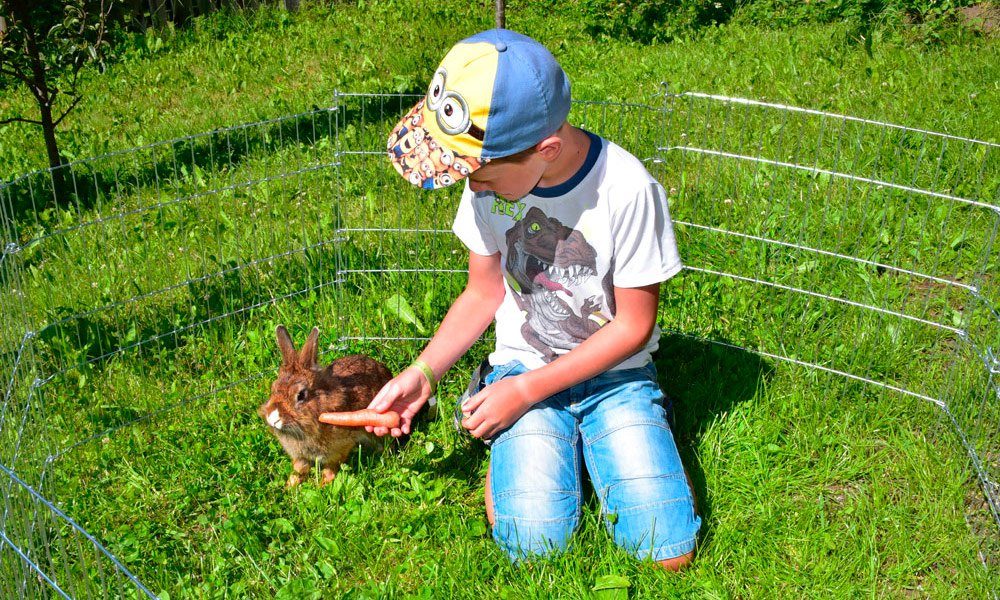 Discover the farm – Farm animals on the Planatschhof